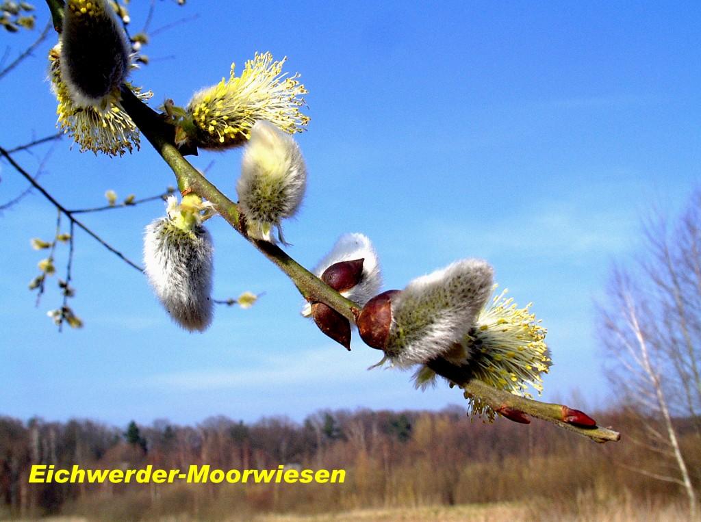 Eichwerder-Moorwiesen 02 Kopie