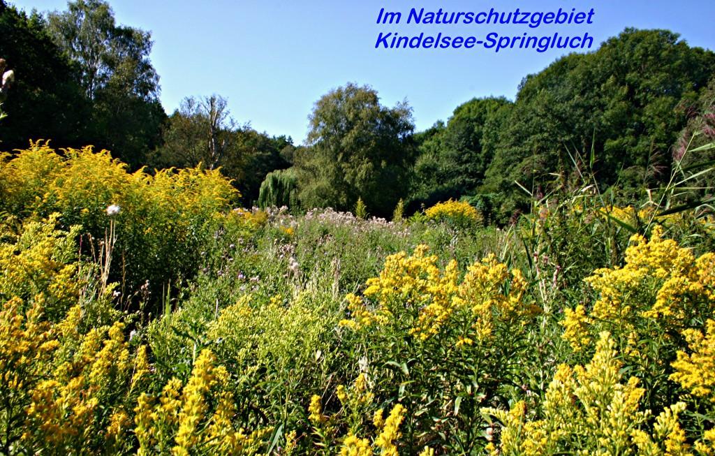 Kindelwald 2009_2 Kopie